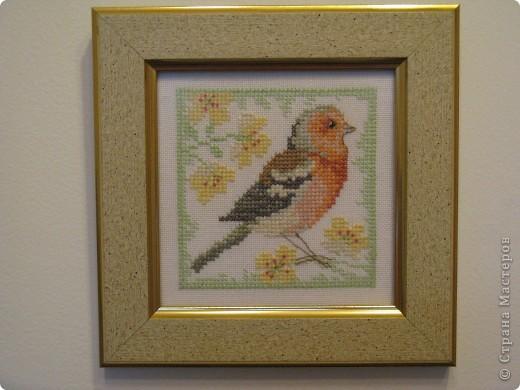 Птички - синички фото 4