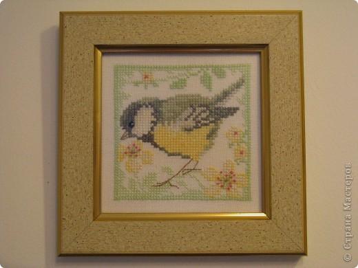 Птички - синички фото 5