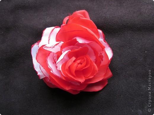 Люблю цветы фото 3