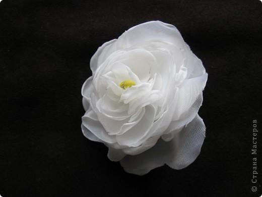 Люблю цветы фото 4