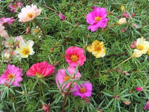 Розы конечно королевы среди цветов, но никто не сравнится с царственной красотой лилий фото 7