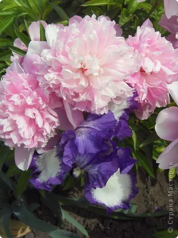 Розы конечно королевы среди цветов, но никто не сравнится с царственной красотой лилий фото 11