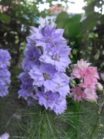 Розы конечно королевы среди цветов, но никто не сравнится с царственной красотой лилий фото 9
