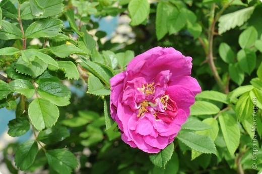 В моем саду фото 5