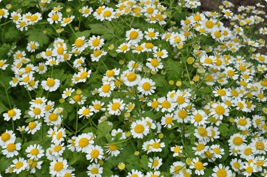 В моем саду фото 6