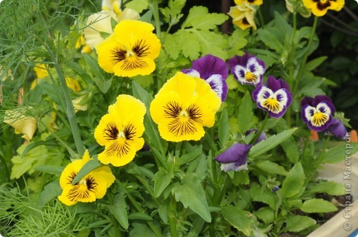 В моем саду фото 4