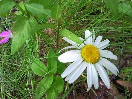 Как и обещала-продолжение темы Что это за цветок- не знаю- но красотища необыкновенная! фото 15