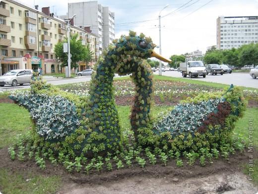 Я обещала вам прогулку по Александровскому саду. Эти цветущие лебеди находятся как раз перед ним. фото 1