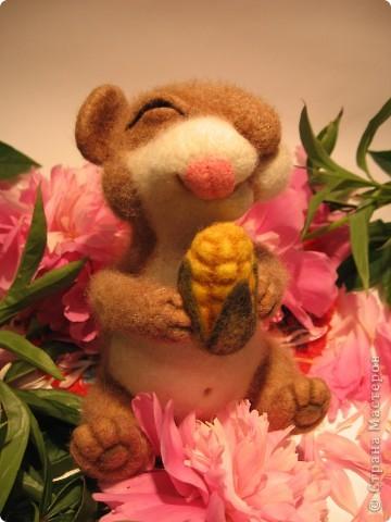 Хомке счастье привалило  - кукурузка хороша! фото 1