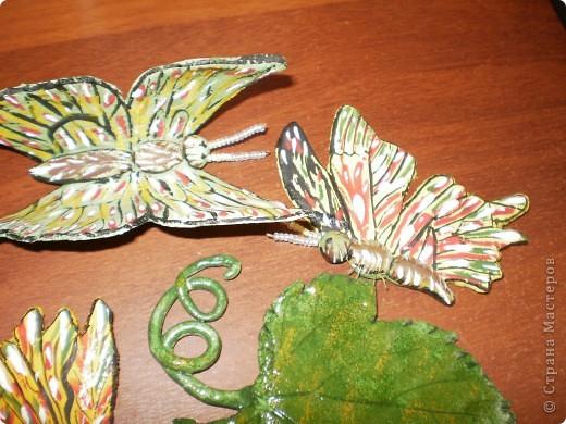 Бабочки и виноград фото 3