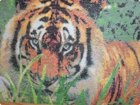 мой тигр