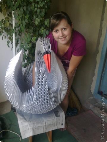 Мой первый большущий лебедь)))) фото 1