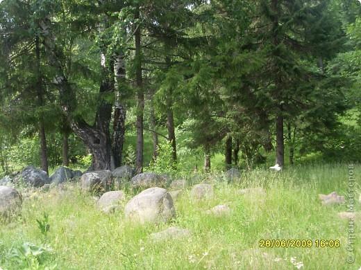 вот и мы по лесу прогулялись))))))))))) фото 3