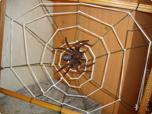 Эту паутину сплел не паук..... а я. Мой сын недавно очень заинтересовался насекомыми и прежде всего пауками. и как-то начал плести паутину. Это оказалось не так-то просто и мы решили подойти к этому делу по-научному. Посмотрели в энциклопедии про насекомых этапы плетения паутины пауком и я стала думать на чем ее сплести. Нашлась рамка размером50*40 см. Сзади вбила тоненькие гвоздики, натянула радиальные нити, скрепив их в центре и начала плести по кругу, хорошо закрепляя нить, что бы не ползала  и не смещала рисунок паутины. Времени заняло все это  от силы 2 часа.  фото 2