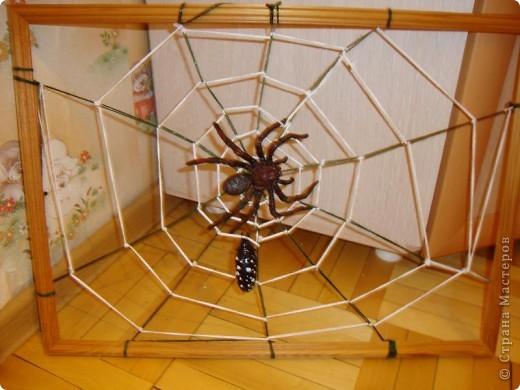 Эту паутину сплел не паук..... а я. Мой сын недавно очень заинтересовался насекомыми и прежде всего пауками. и как-то начал плести паутину. Это оказалось не так-то просто и мы решили подойти к этому делу по-научному. Посмотрели в энциклопедии про насекомых этапы плетения паутины пауком и я стала думать на чем ее сплести. Нашлась рамка размером50*40 см. Сзади вбила тоненькие гвоздики, натянула радиальные нити, скрепив их в центре и начала плести по кругу, хорошо закрепляя нить, что бы не ползала  и не смещала рисунок паутины. Времени заняло все это  от силы 2 часа.  фото 1