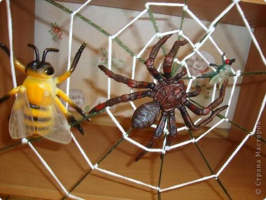 Эту паутину сплел не паук..... а я. Мой сын недавно очень заинтересовался насекомыми и прежде всего пауками. и как-то начал плести паутину. Это оказалось не так-то просто и мы решили подойти к этому делу по-научному. Посмотрели в энциклопедии про насекомых этапы плетения паутины пауком и я стала думать на чем ее сплести. Нашлась рамка размером50*40 см. Сзади вбила тоненькие гвоздики, натянула радиальные нити, скрепив их в центре и начала плести по кругу, хорошо закрепляя нить, что бы не ползала  и не смещала рисунок паутины. Времени заняло все это  от силы 2 часа.  фото 3