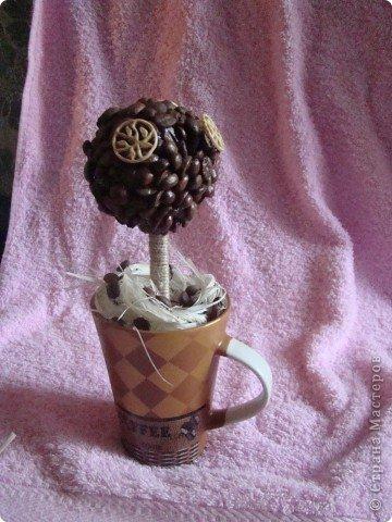 """Кофейное дерево, высота 20 см, зерна клеила на ПВА, а """"цветочки"""" - Титаном Подарила Женскому клубу """"Магнолия"""" фото 1"""