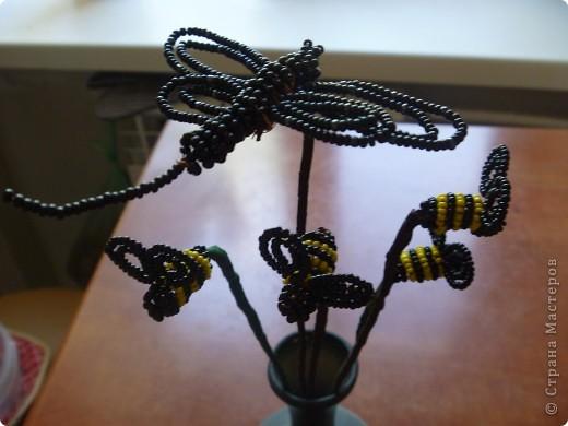Бабочки красавицы фото 2