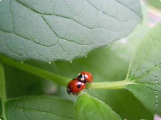 Бабочка красавица. фото 2