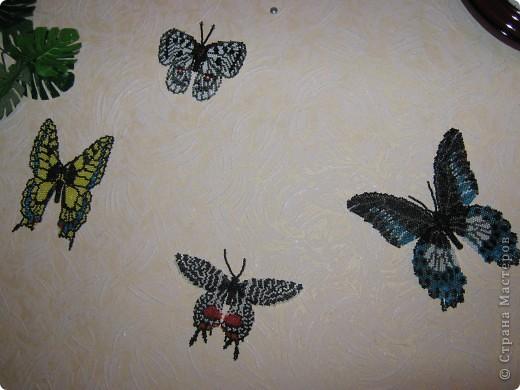 Вот так они красуются у меня на стеночке... фото 1