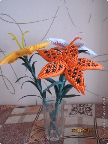Вот такие лилии у меня получились! фото 2
