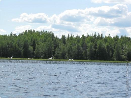 Наше любимое место отдыха - это озеро. Здесь мы рыбачим, собираем ягоды, грибы. Раньше здесь было только два лебедя, а теперь их целое семейство. На рыбалку приехали с внучками (10 лет и 2 года). фото 2