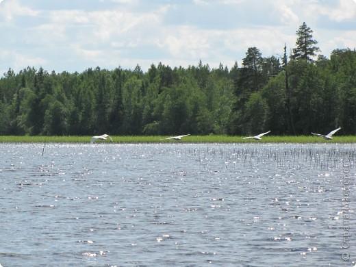 Наше любимое место отдыха - это озеро. Здесь мы рыбачим, собираем ягоды, грибы. Раньше здесь было только два лебедя, а теперь их целое семейство. На рыбалку приехали с внучками (10 лет и 2 года).