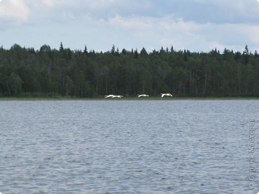 Наше любимое место отдыха - это озеро. Здесь мы рыбачим, собираем ягоды, грибы. Раньше здесь было только два лебедя, а теперь их целое семейство. На рыбалку приехали с внучками (10 лет и 2 года). фото 3