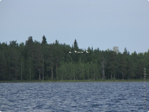 Наше любимое место отдыха - это озеро. Здесь мы рыбачим, собираем ягоды, грибы. Раньше здесь было только два лебедя, а теперь их целое семейство. На рыбалку приехали с внучками (10 лет и 2 года). фото 4
