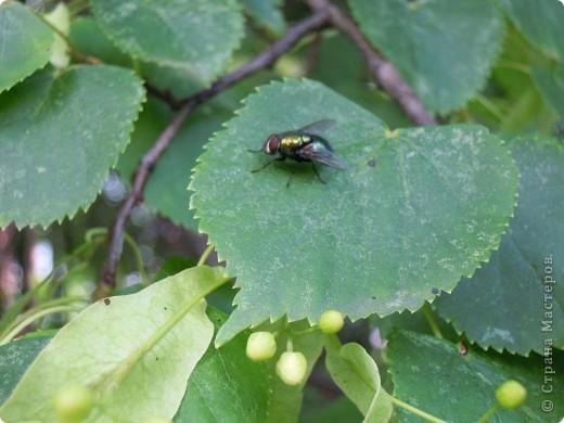 Бабочка красавица. фото 8
