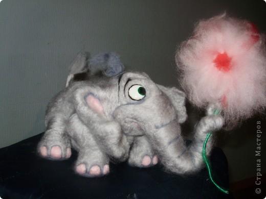 Слоняка нашёл цветочек фото 1