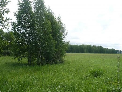 Красивы леса Омской области! фото 2