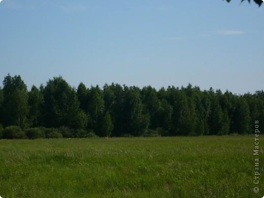 Красивы леса Омской области! фото 3