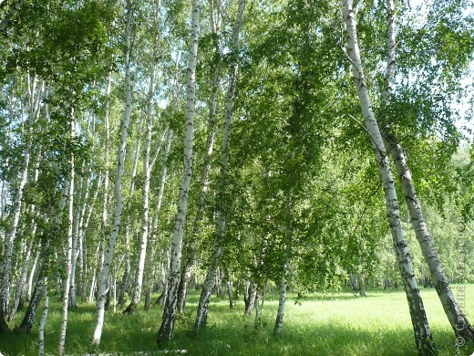 Красивы леса Омской области! фото 16