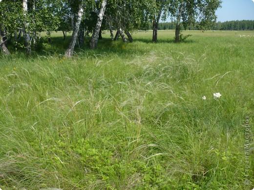 Красивы леса Омской области! фото 17
