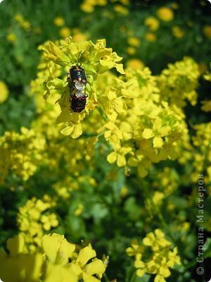 Бабочка красавица. фото 15