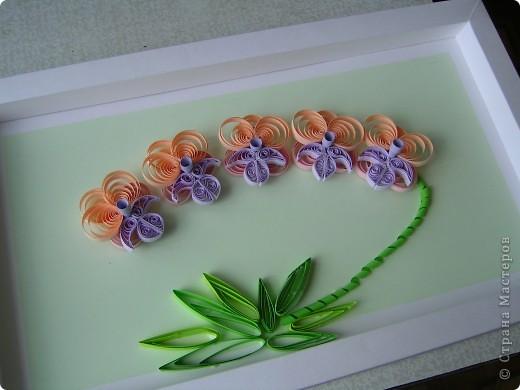 Орхидеи.В подарок. фото 1