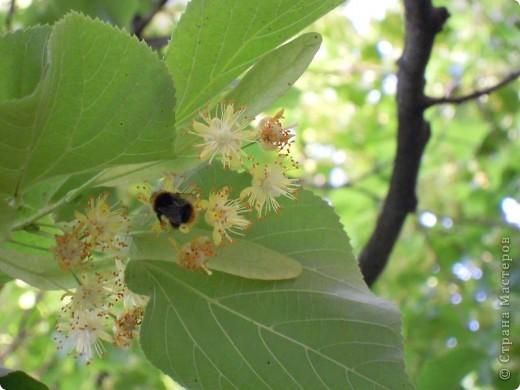 Бабочка красавица. фото 13