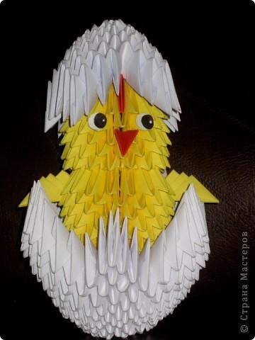цыпленок фото 2