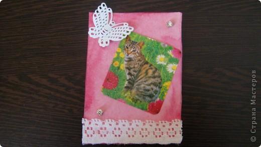 Садовые кошки фото 2
