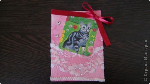 Садовые кошки фото 3