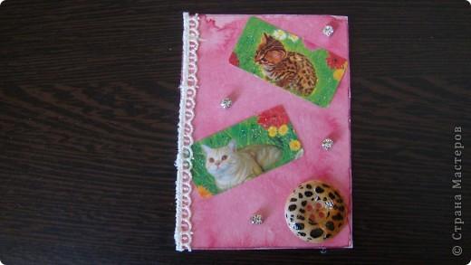 Садовые кошки фото 4