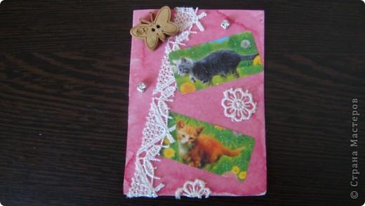 Садовые кошки фото 6