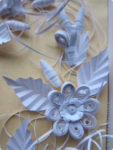 Белые цветы фото 2