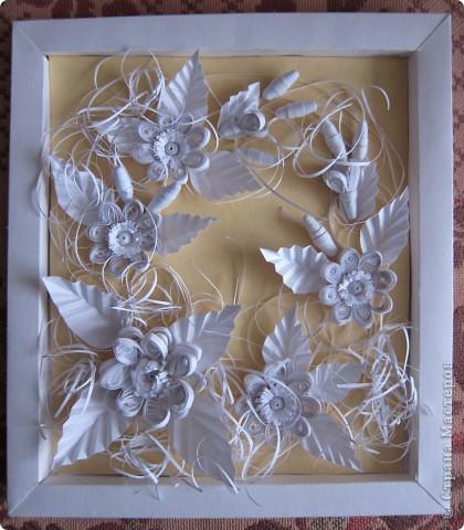 Белые цветы фото 1