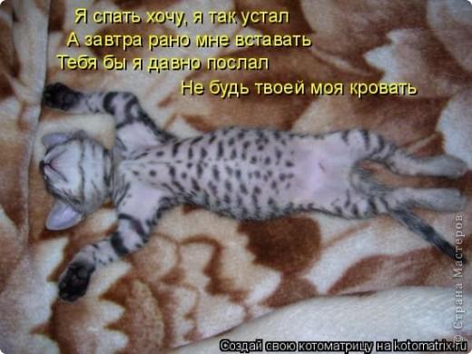 Мой кот!!!!  фото 11