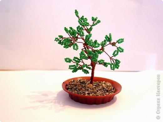 маленькое деревце фото 1