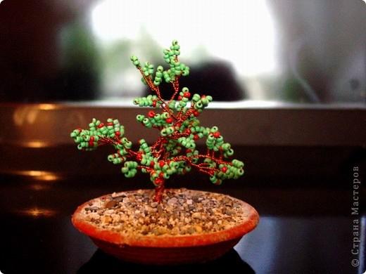 маленькое деревце фото 2