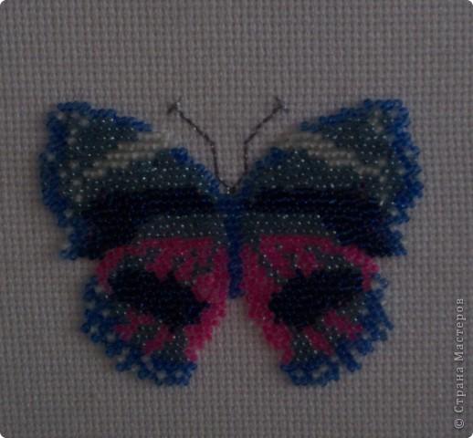 Пробовала вышивать бисером. Для этого брала схемку для вышивки крестом. Показалось, что бабочки в бисере будут выглядеть богаче, живее  фото 2
