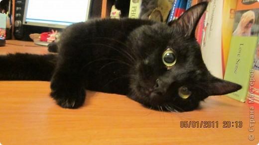 Мой кот!!!!  фото 2
